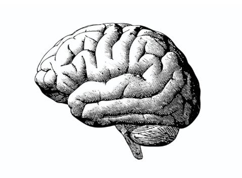 black-white-brain_large
